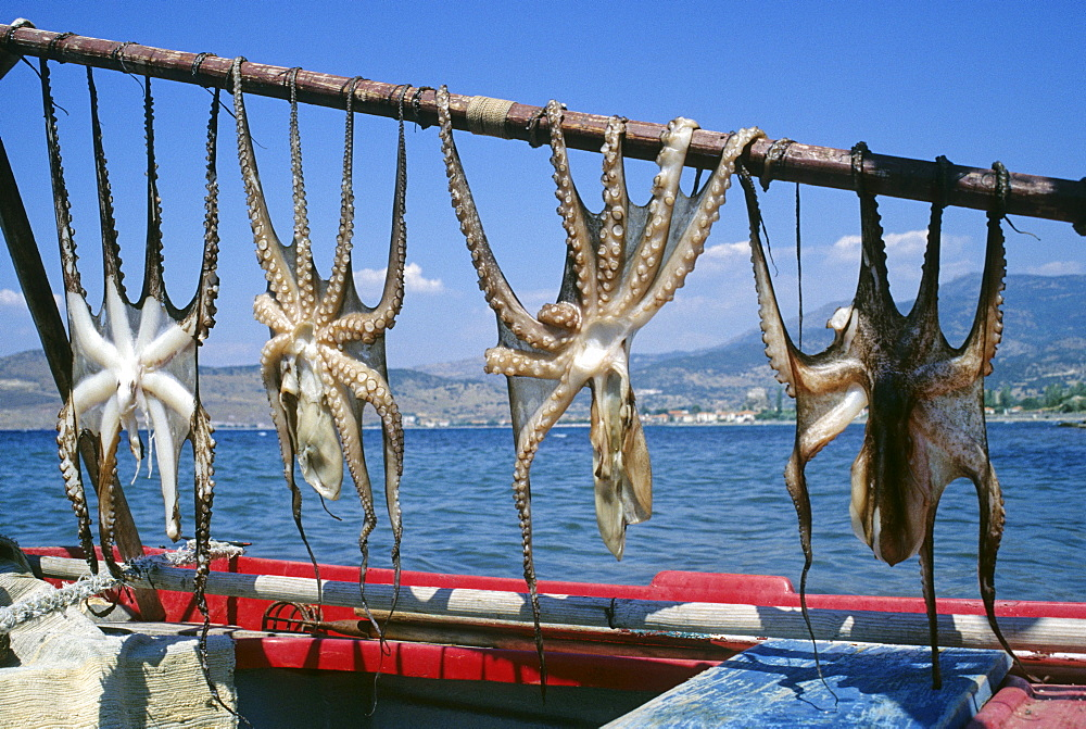 Drying calamary in the sunlight, Lesbos island, Greece, Europe