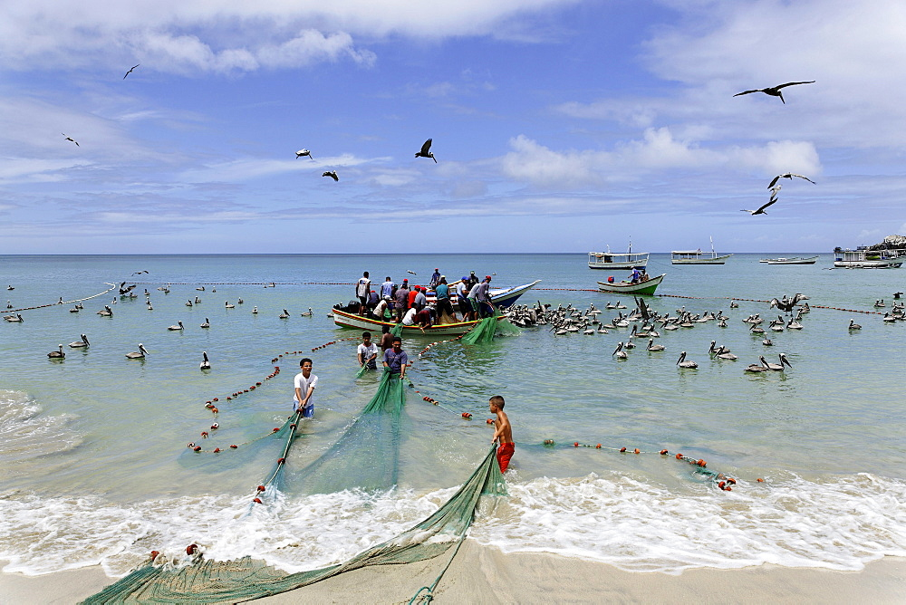 Fishermen pulling in nets, Playa Guayacan, Isla Margarita, Nueva Esparta, Venezuela