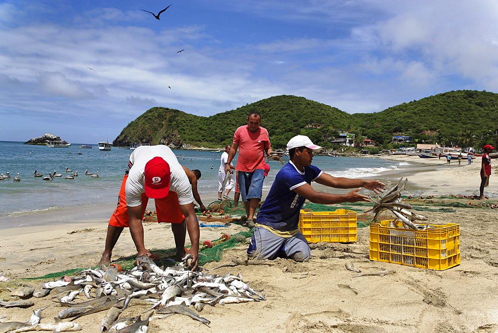 Fishermen sorting fishes, Playa Guayacan, Isla Margarita, Nueva Esparta, Venezuela