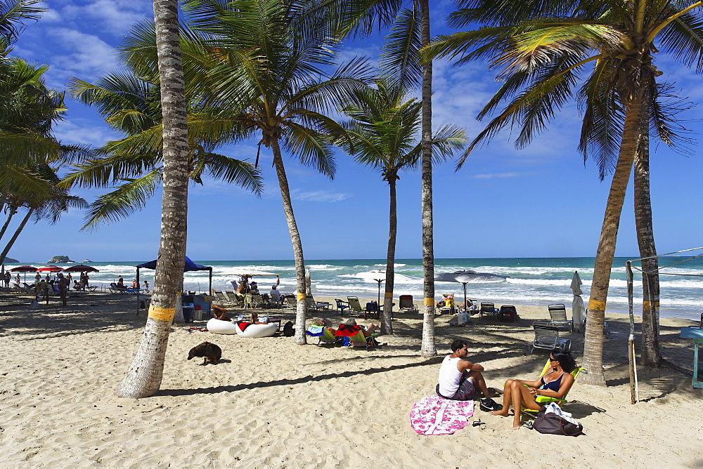 Palm trees at Playa El Aqua, Isla Margarita, Nueva Esparta, Venezuela