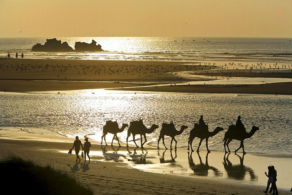 petite-camels-oceans-lesbian-paris