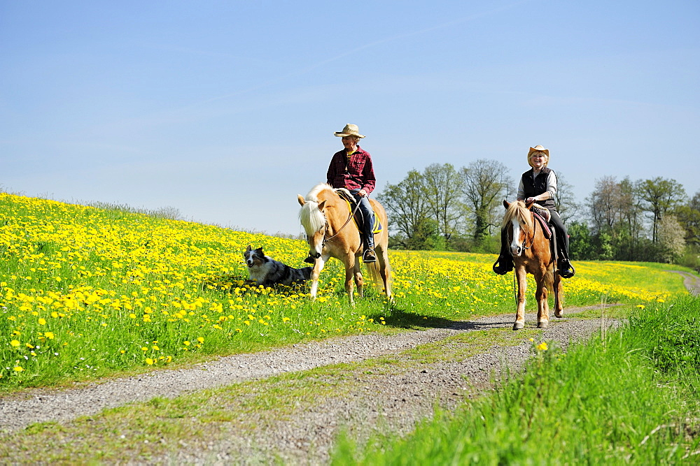 Two women riding horses on a track through a meadow with dandelions, Lindau, lake Constance, Bavaria, Germany