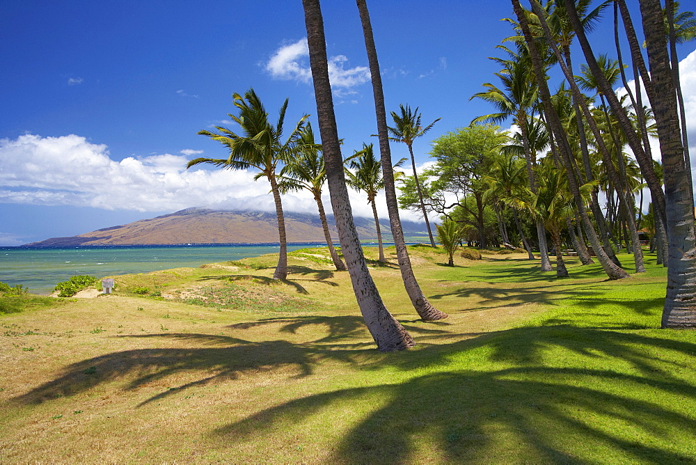 Palm trees at Mai Poina'Oe La'u State Park, Pu'u Kukui, North Kihei, Maui, Hawaii, USA, America