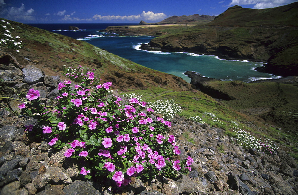 Wildflowers on the island of Ua Huka, French Polynesia