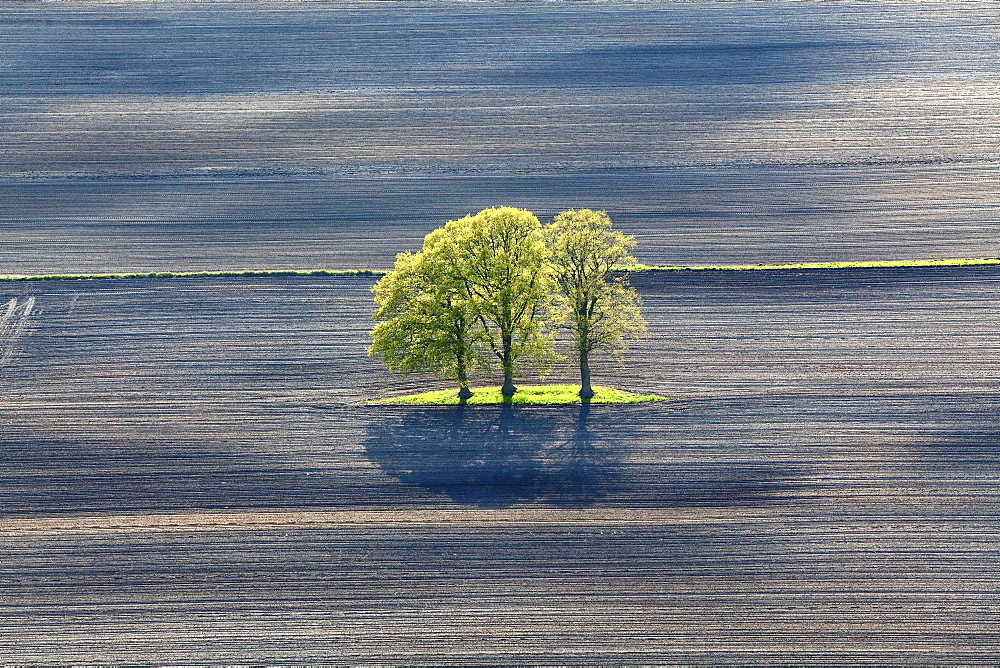 Aerial spring green leaves on a row of trees, lines in a ploughed field, Lower Saxony, Germany