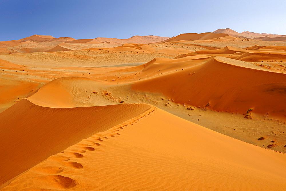 Foot prints on red sand dune in Sossusvlei, Sossusvlei, Namib Naukluft National Park, Namib desert, Namib, Namibia