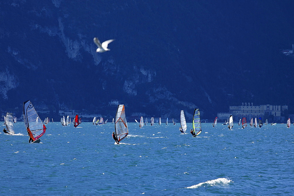 Windsurfer nearby Torbole, Lake Garda, Trento, Italy