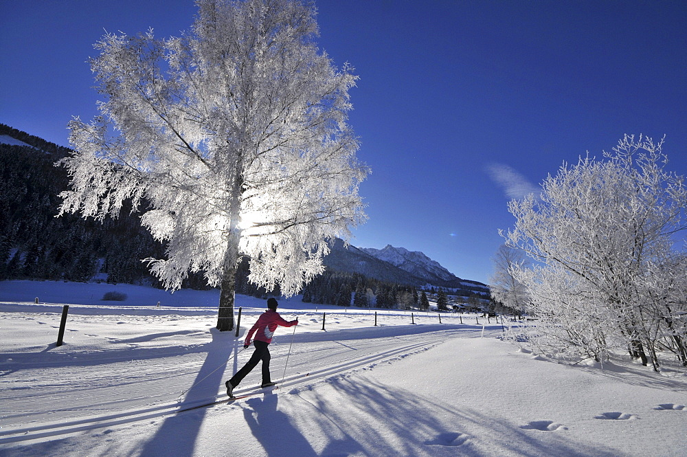 Woman cross-country skiing near Koessen, Kaiserwinkl, Winter in Tyrol, Austria
