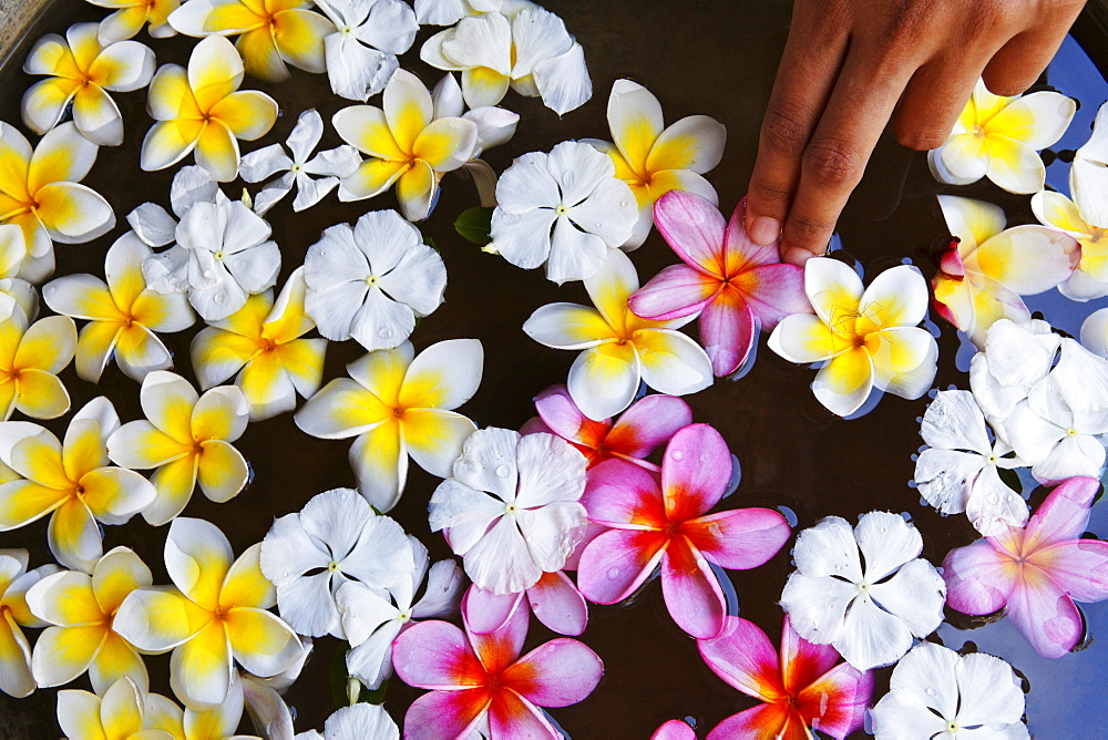 Flowers at the Spa of Shanti Maurice Resort, Souillac, Mauritius, Africa - 1113-44544