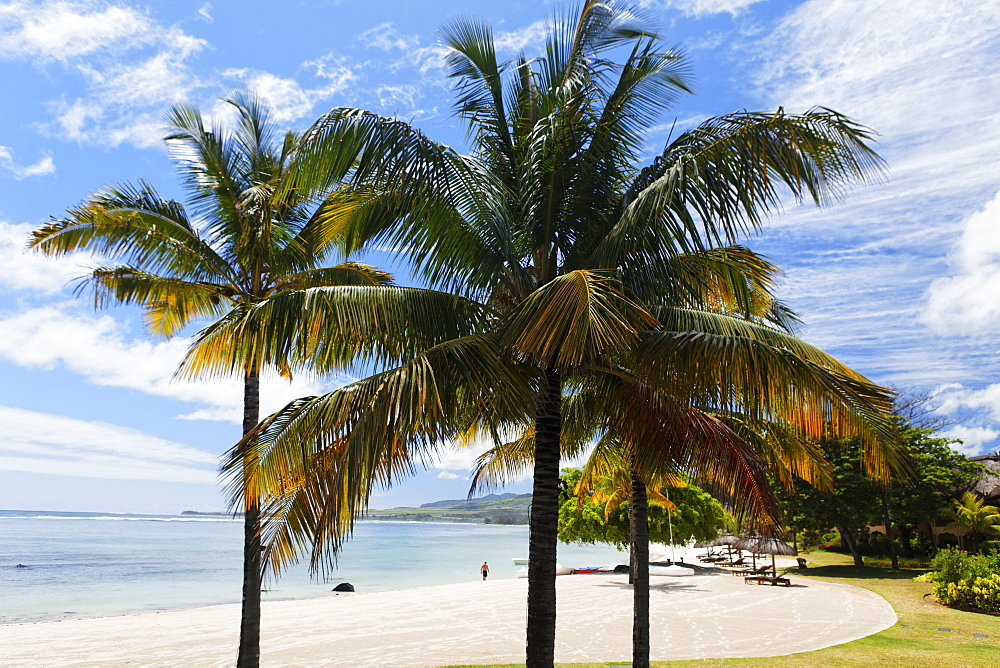 Palm trees on the beach of the Shanti Maurice Resort in the sunlight, Souillac, Mauritius, Africa