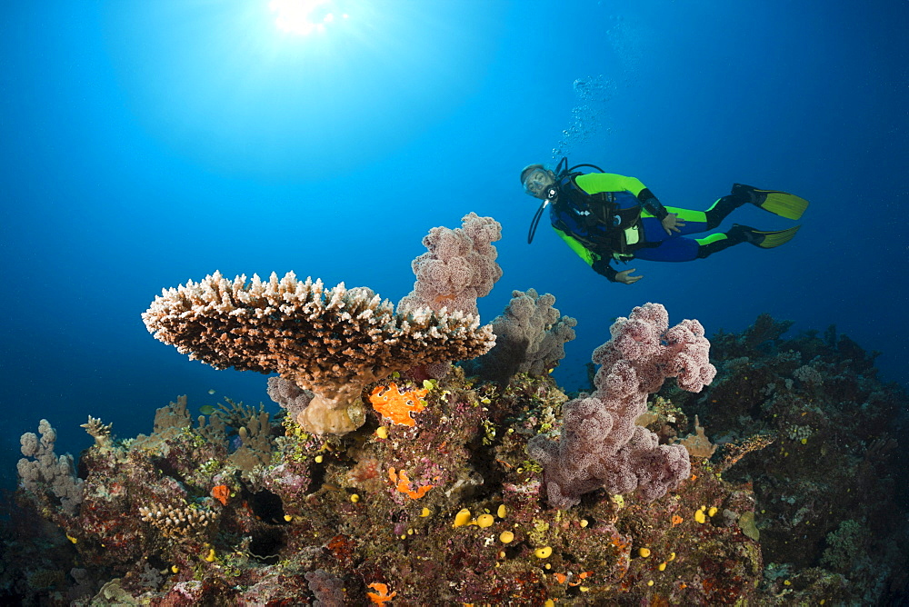 Scuba Diver over Coral Reef, Wakaya, Lomaiviti, Fiji