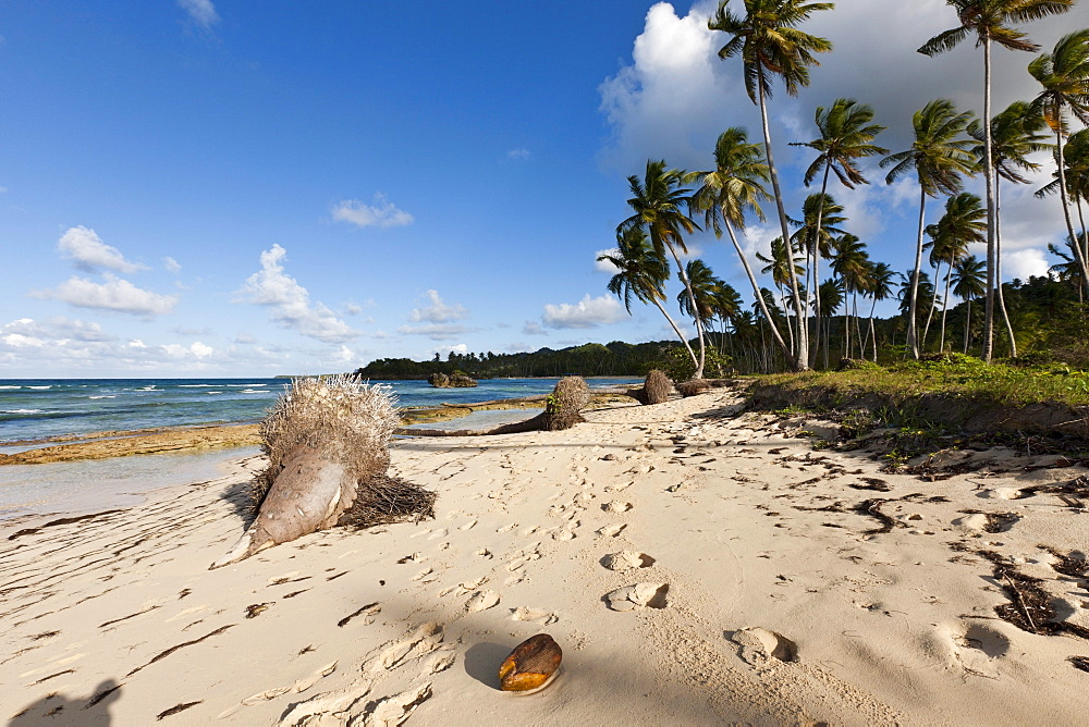 Playa Rincon Beach near Las Galeras, Samana Peninsula, Dominican Republic
