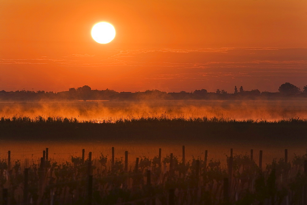 Lake Neusiedl at sunrise, Fertoe National Park, Burgenland, Austria, Europe