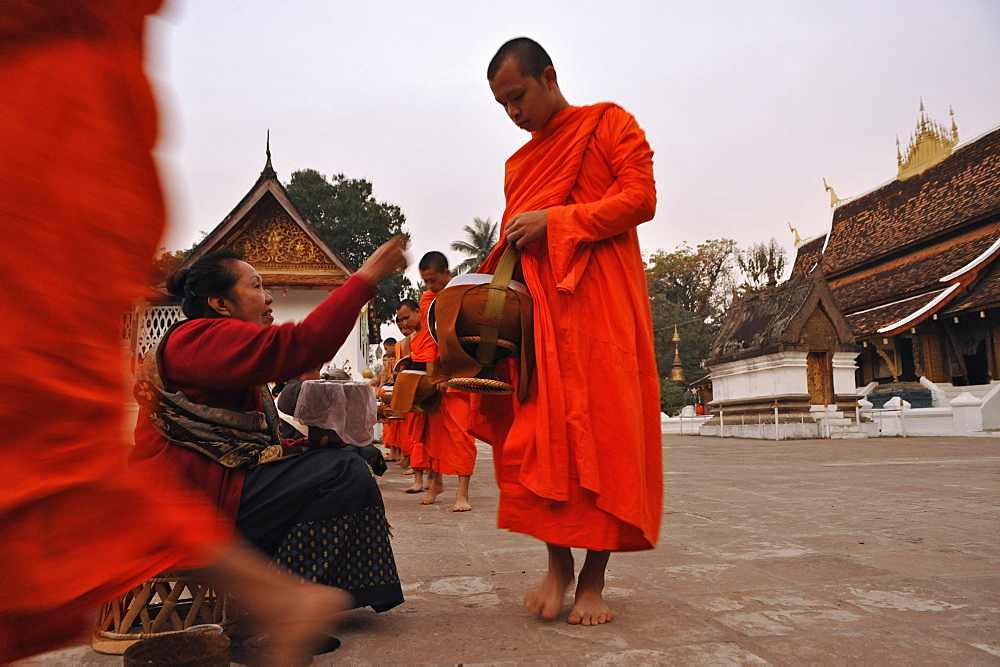 Monks collecting alms before sunrise, Luang Prabang, Laos