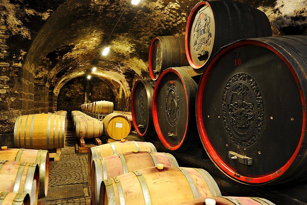 Wine barrels in the winery Bolzano, Bolzano, South Tyrol, Italy, Europe