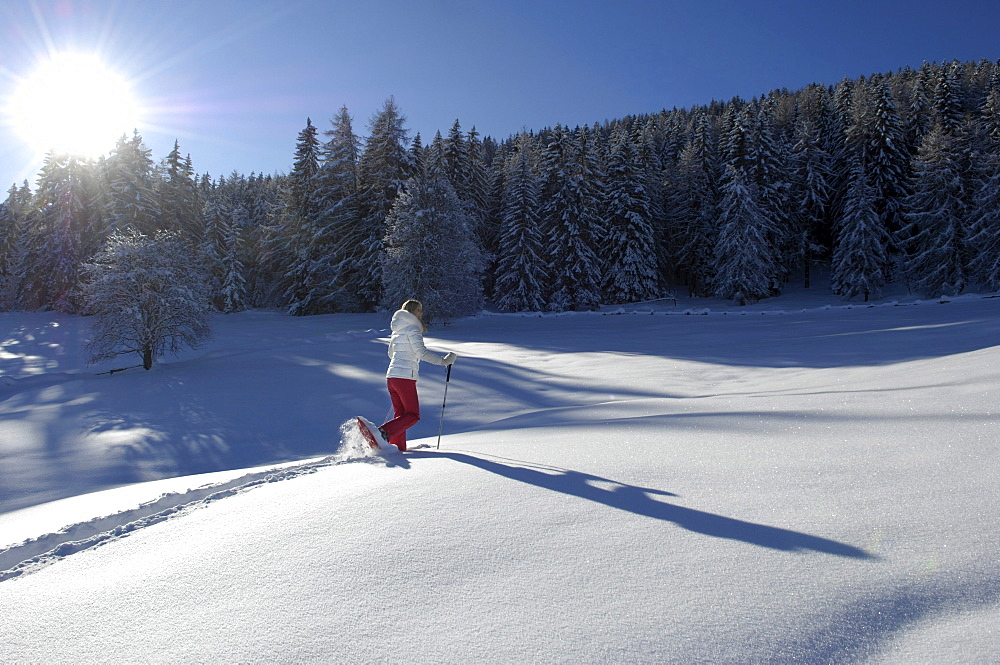 One person snowshoeing in snowy landscape, Alto Adige, South Tyrol, Italy, Europe