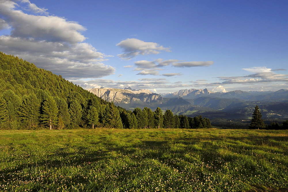 Alp meadow in the mountains, Alto Adige, UNESCO World Nature Site, South Tyrol, Italy