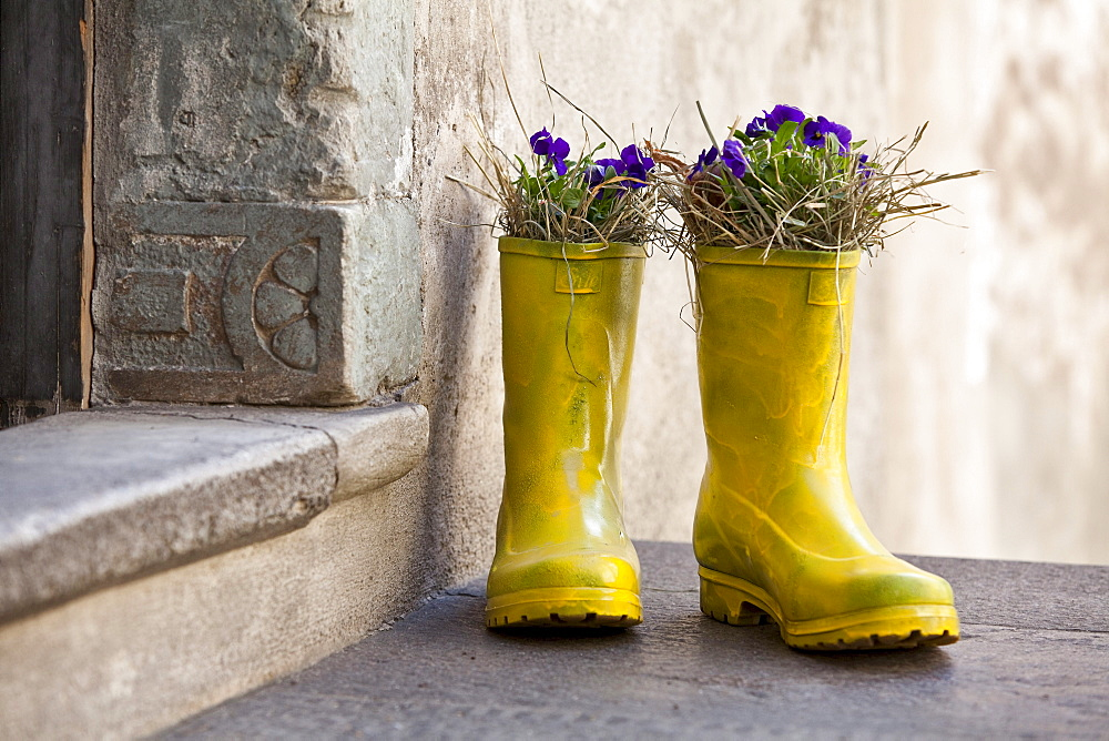 Wellingtons with flowers in front of an entrance, South Tyrol, Alto Adige, Italy, Europe