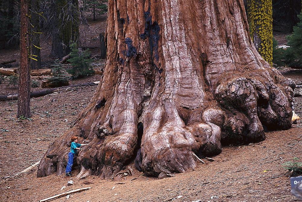 Boy standing next to a Giant Sequoia, Mariposa Grove, Yosemite National Park, California, USA