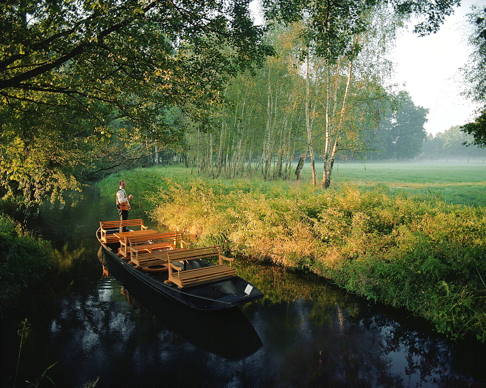 Traditional Spreewald boat in the morning, tourguide Hagen Conrad punting on a stream to pick up tourists in Burg-Kauper, Upper Spreewald, biosphere reservat, Spreewald, Brandenburg, Germany