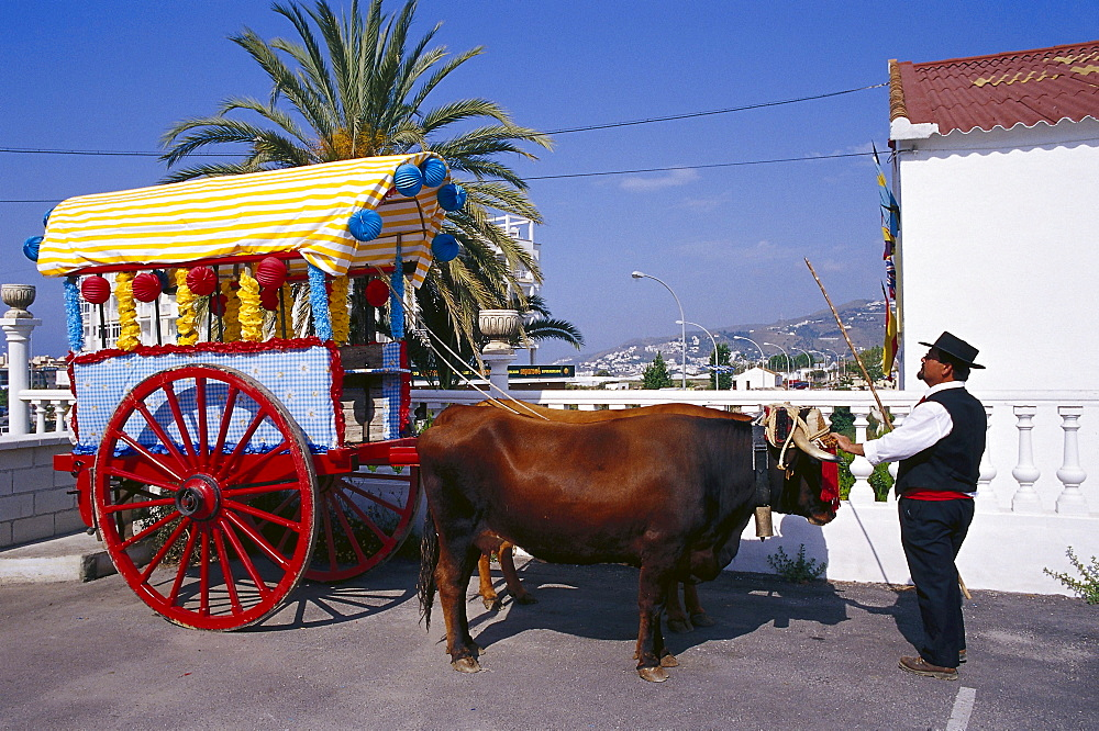 Pilgrim with decorated oxcart, Romeria de San Isidro, Nerja, Costa del Sol, Malaga province, Andalusia, Spain, Europe