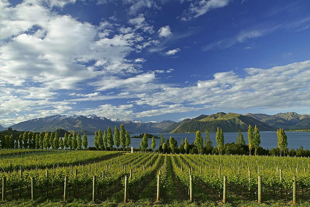 Rippon Vineyard at Lake Wanaka, Otago, South Island, New Zealand