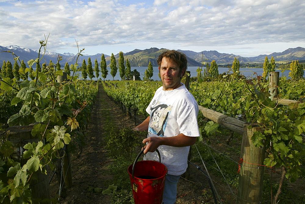 Winemaker Nick Mills at vineyard on shores of Lake Wanaka, Rippon Vineyard, Otago, South Island, New Zealand, Oceania