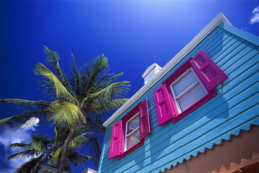 Colourful house and palm tree under blue sky, Pusser¥s Landing, West End, Tortola, British Virgin Islands, Caribbean, America - 1113-60119