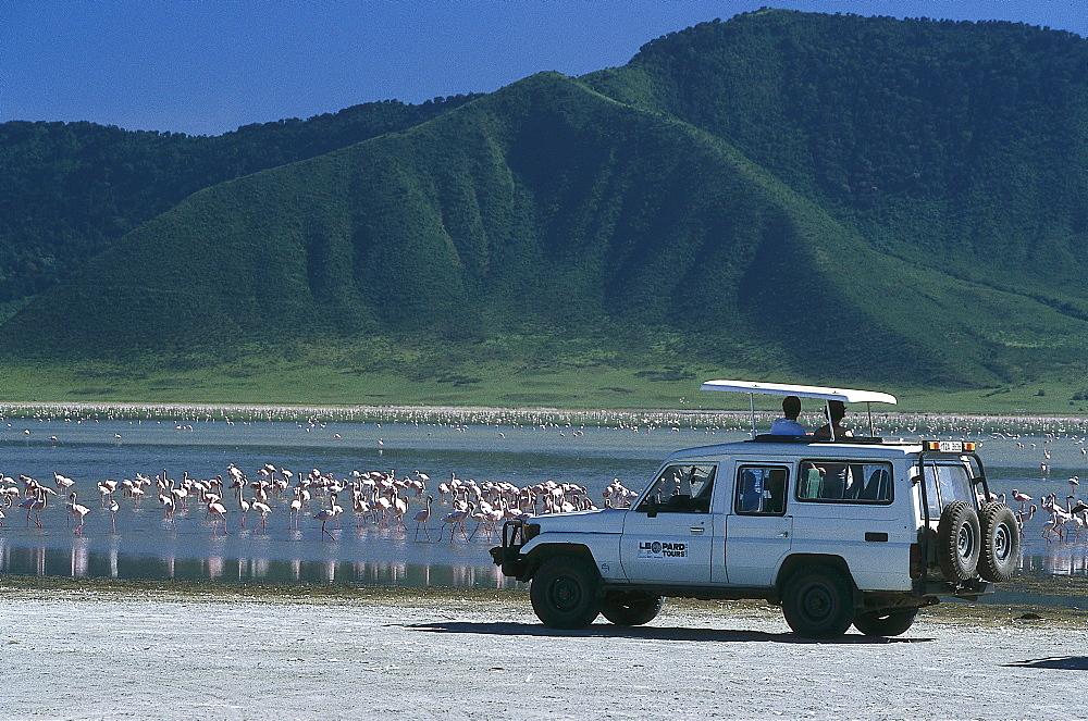 Flamingoes at Lake Magadi, Jeep Safari, Ngorongoro Crater, Tanzania - 1113-60656