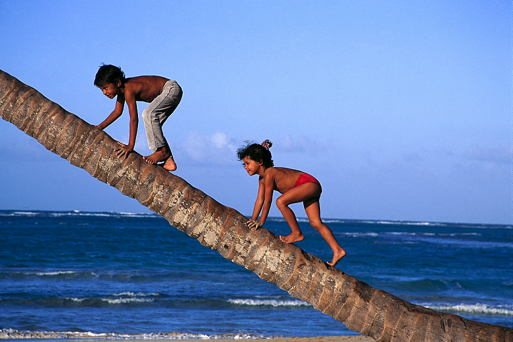 Kids climbing on a palm, Dominican Republic, Caribbean