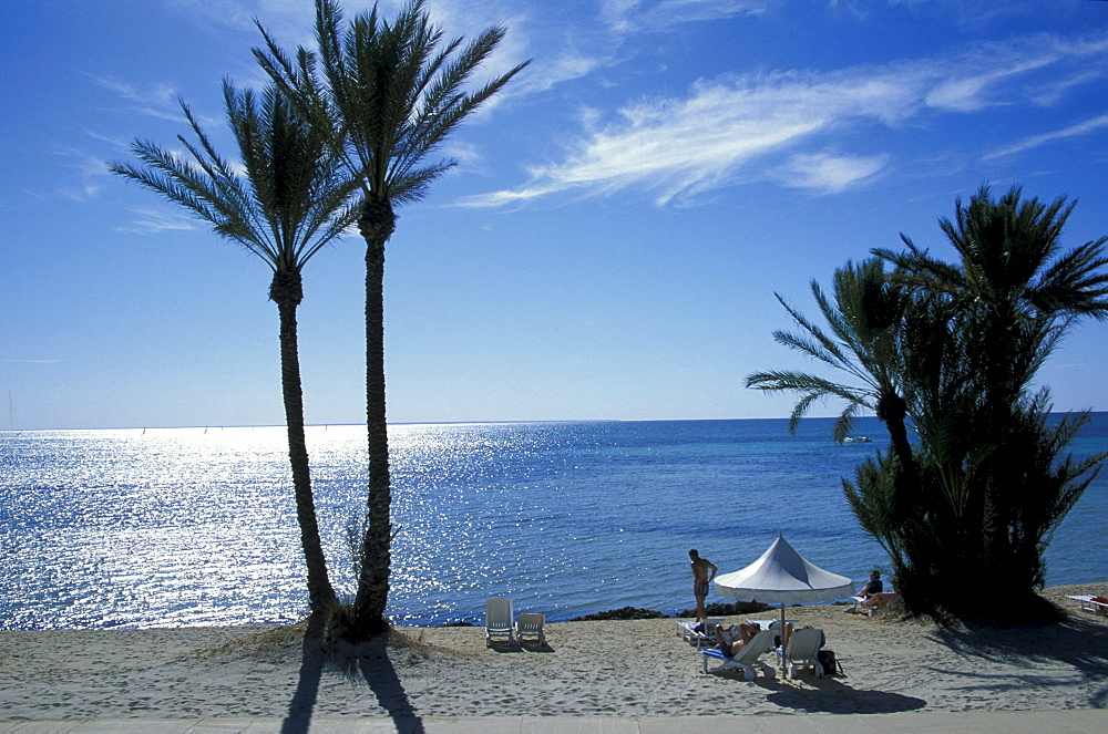 Beach with palms, Djerba, Tunis