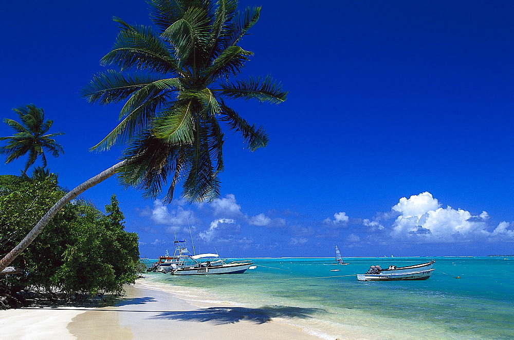 Palm beach, Coconut palms, motor boat, Pigeon Point, Tobago, West Indies, Caribbean