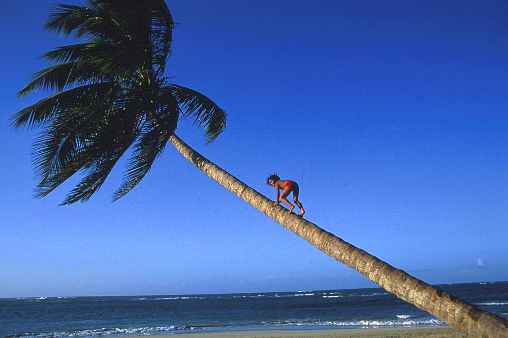 Child is climbing a palm tree, Dominican Republic, America