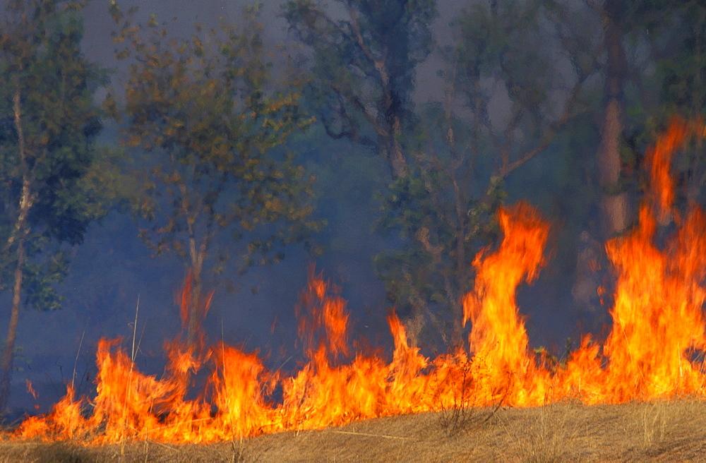Bush fire in savannah, Kimberley, West Australia, Australia