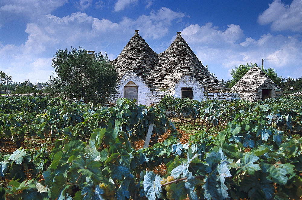 Trullo House in a vineyard, Apulia, Italy