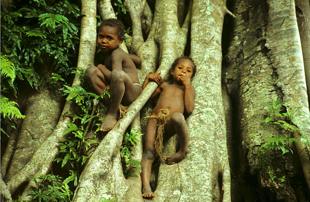 Village children climbing a tree, Yakel Village, Tanna, Vanuatu, South Pacific