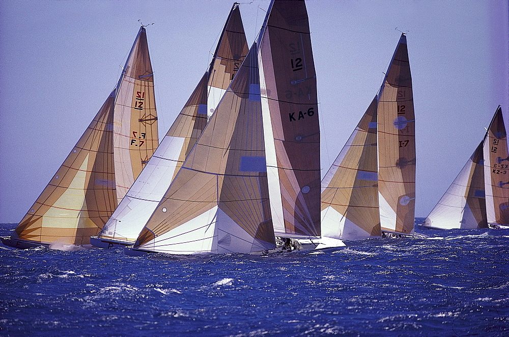 Sailing boats at a regatta, Perth, Western Australia, Australia