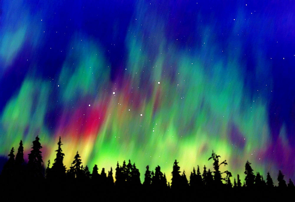 Northern lights above taiga forest, Alaska, USA, America