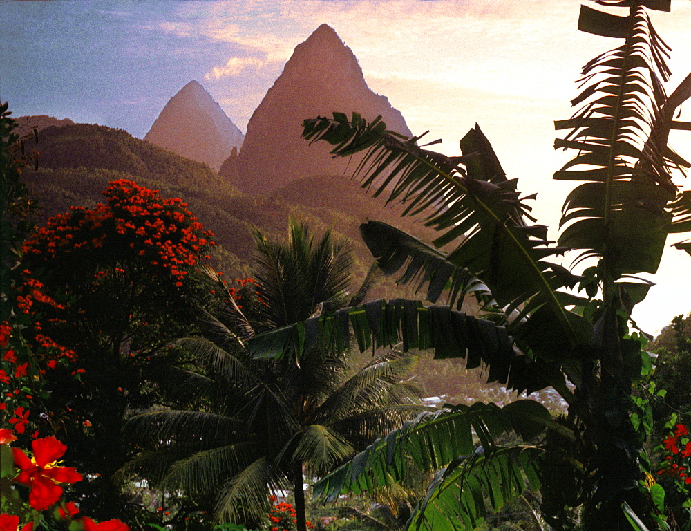 Palm trees and the mountains Two Pitons at sunset, Soufriere, St. Lucia, Carribean, North America - 1113-64558