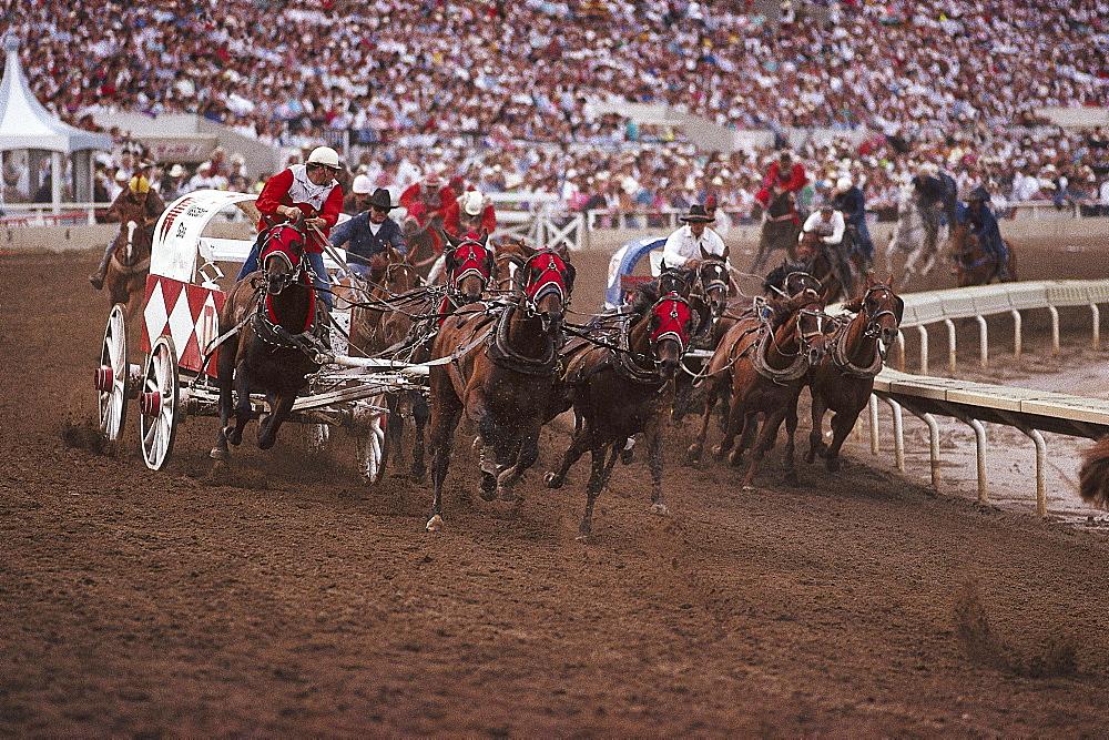 Chuckwagon Race, Calgary Stampede, Alberta, Canada, North America, America