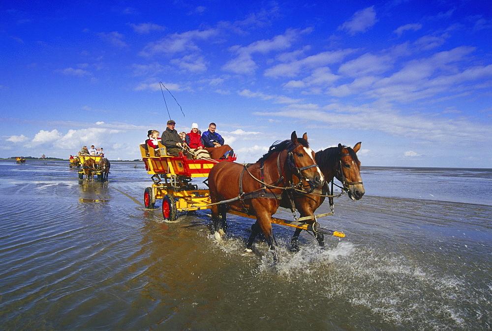 Horse-Drawn Carriage Ride to Island Neuwerk, National Park Hamburgisches Wattenmeer, Germany00058520
