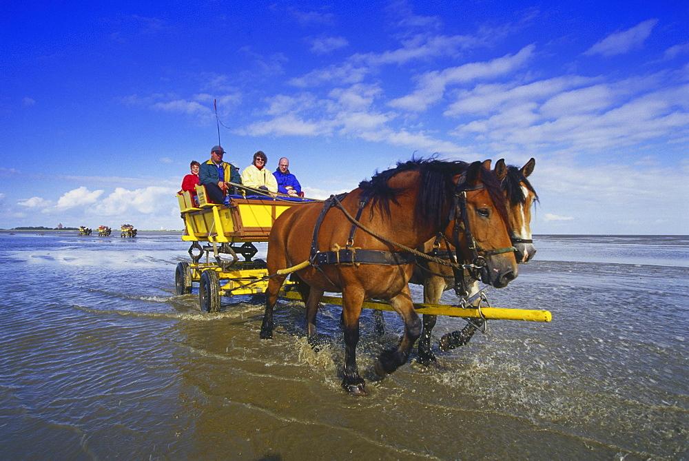 Horse-Drawn Carriage Ride to Island Neuwerk, National Park Hamburgisches Wattenmeer, Germany00058521
