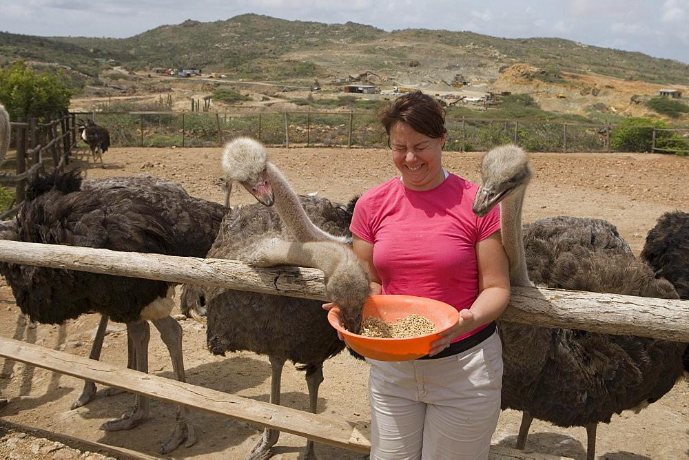 Woman Feeding Ostriches at Aruba Ostrich Farm, Aruba, Dutch Caribbean