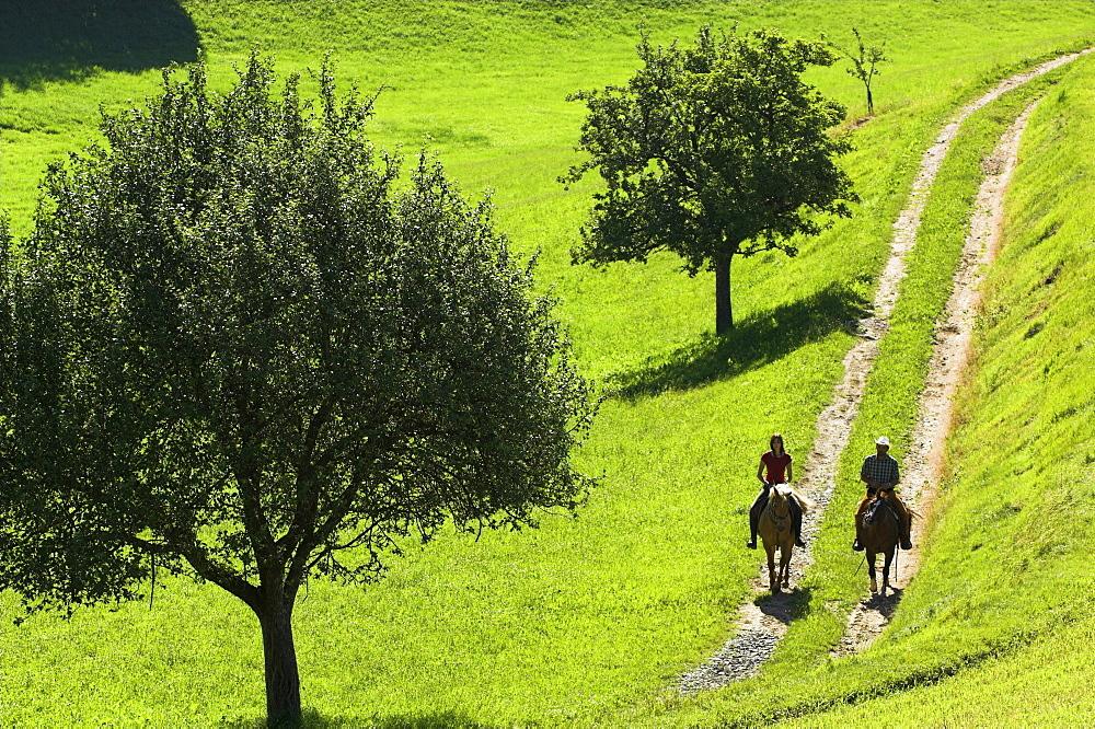 zwei reiter im schritt auf einem feldweg in der morgenstimmung