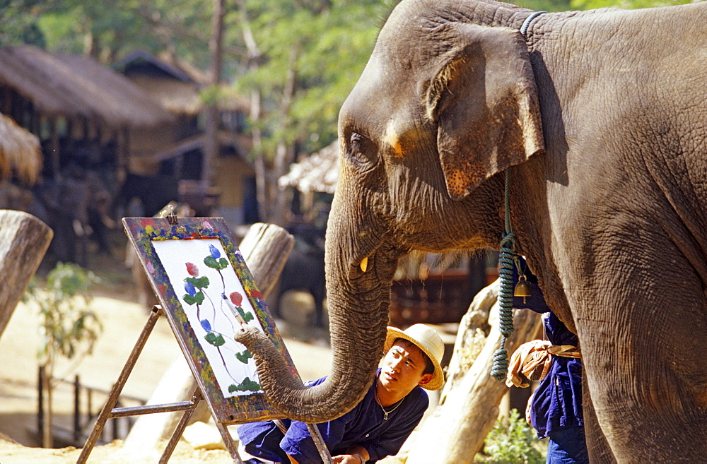 Painting elephant in an elephant camp north of Chiang Mai, Thailand