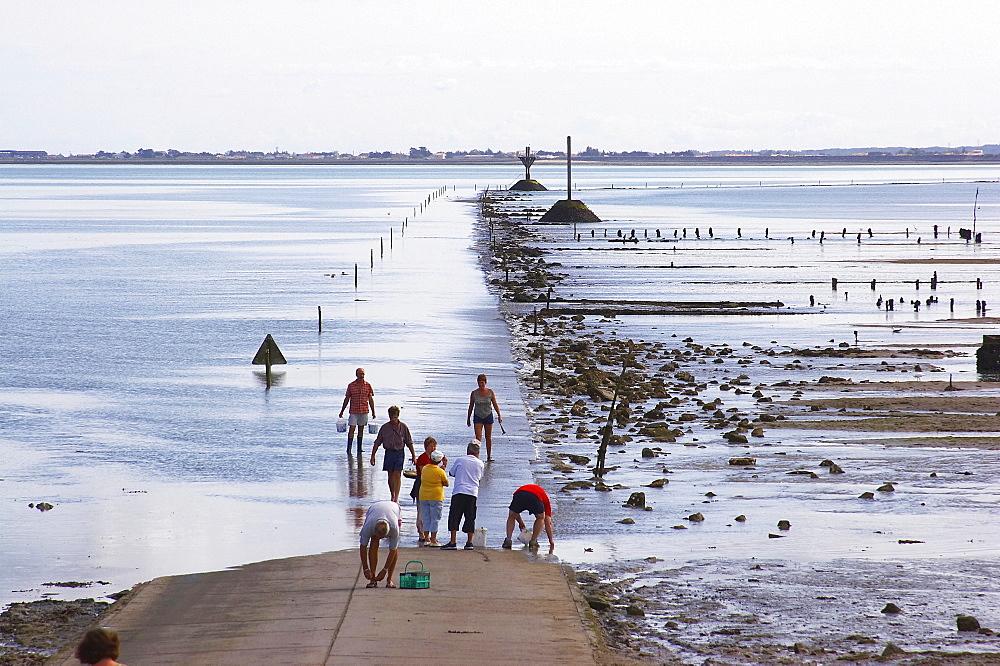 Passage du Gois Route practicable a basse mer-road from the Ile de Noirmoutier to the mainland, dept Loire-Atlantique, France, Europe