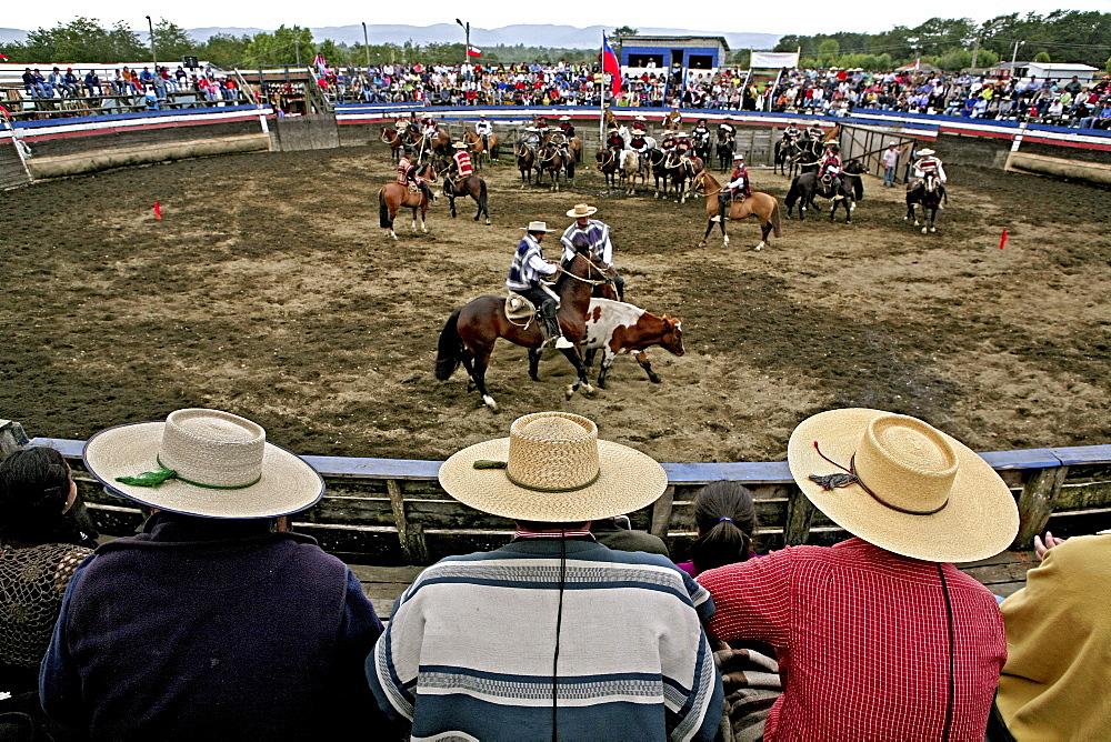 Rodeo in Conchi, Chiloé, Chile, South America
