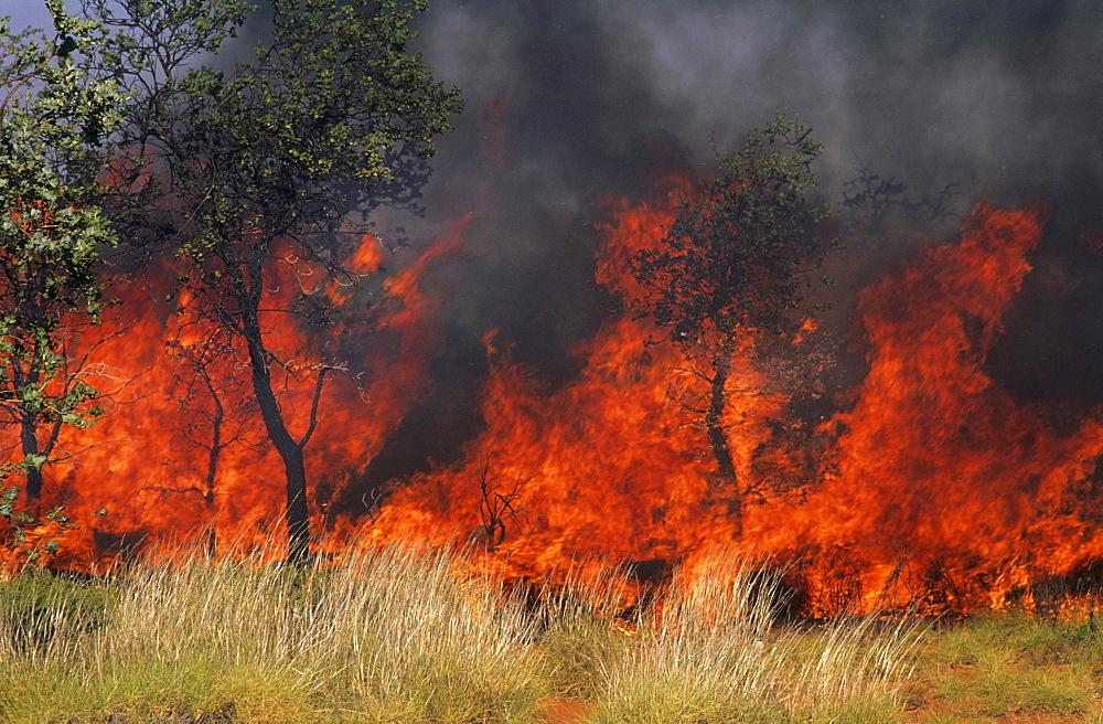 Controlled burning in park, bushfire, Kakadu National Park, Northern Territory, Australia