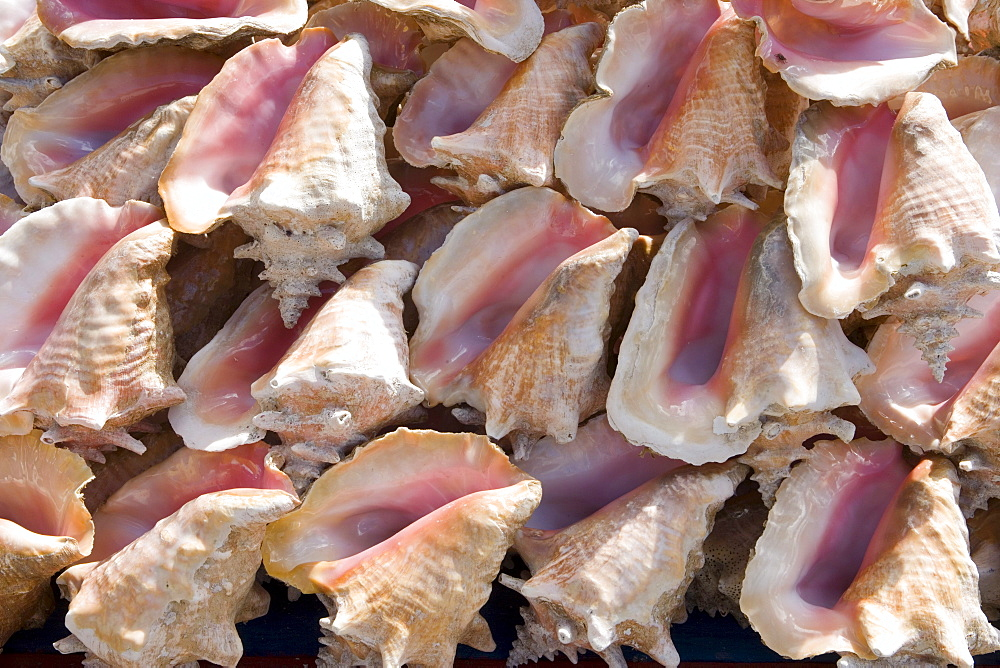 Conch Shells at Market, St. George's, Grenada