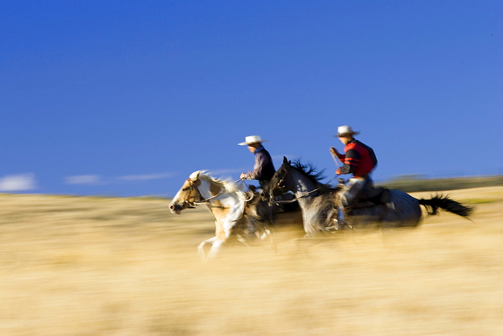 Cowboys riding, wildwest, Oregon, USA